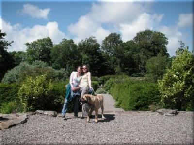 Old English Mastiff - Loki enjoying a walk on Skye