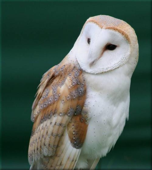 Новгороде будет открыто представительство Союза охраны птиц России.