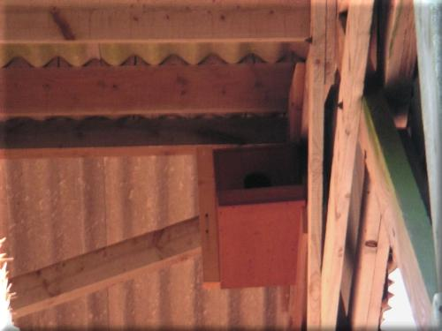 Barn Owl box with eggs