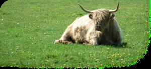Aberdeenshire Guestbook